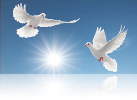 Tauben hochzeit graubunden